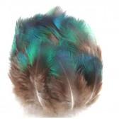 Plumes de Paon vert 5 à 10 cm x10